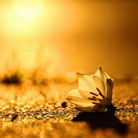 Sessions de Meditació Raja Ioga