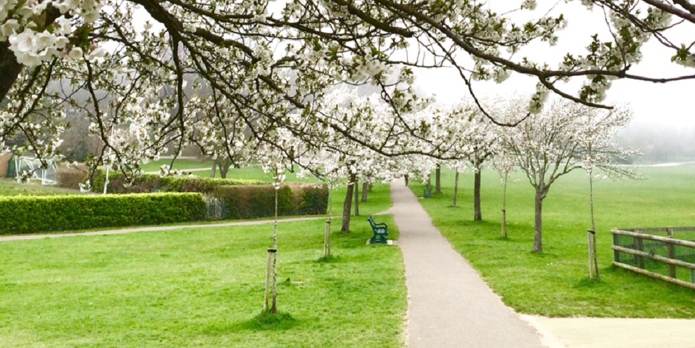 World Peace Hour in the Park ~ Hove Park   *NEW EVENT*