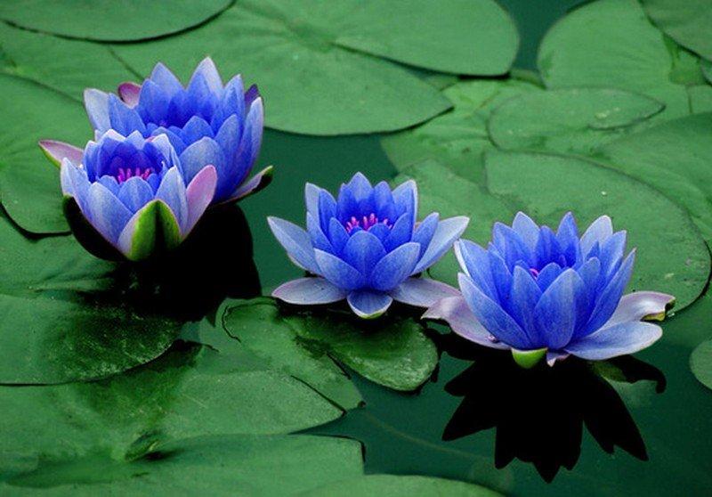 Foundation Course in Raja Yoga Meditation - New Hampshire