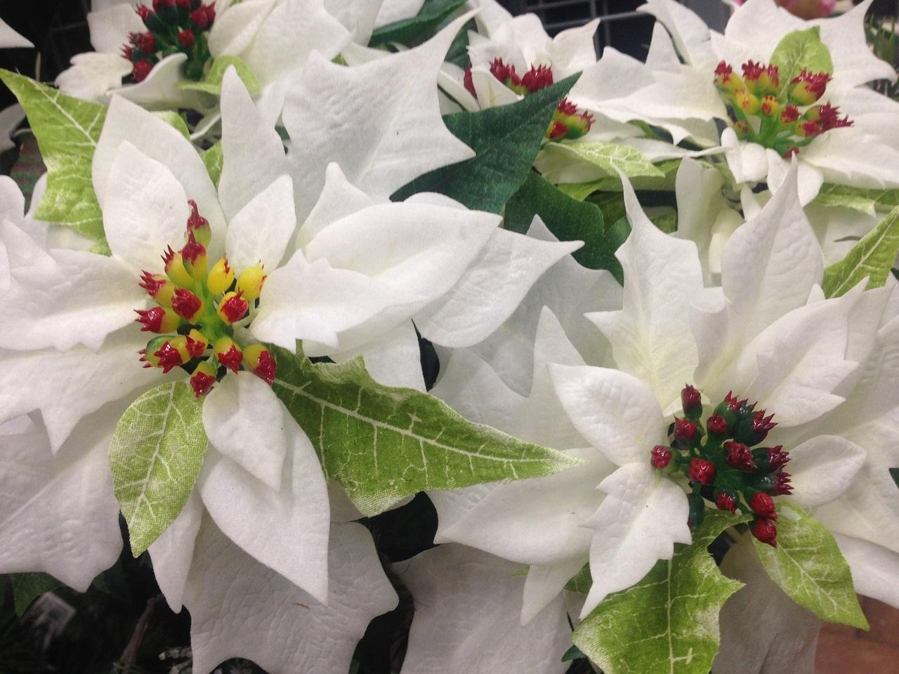 Veggie ideas for Christmas