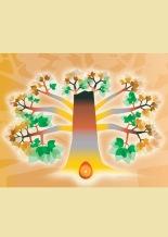 Aula de Meditação - A Fonte *