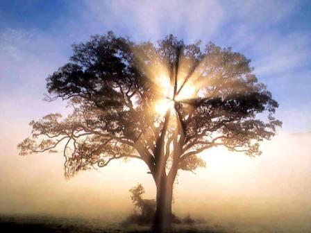 TAMPERE: Raja Jooga II-meditaatiokurssi