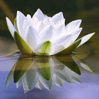 Trobada - Meditació (GIRONA)