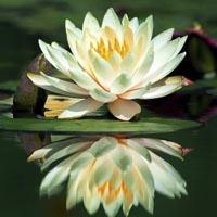 Curso Esencial de meditación Raja Yoga (curso de 4 sesiones) On-line